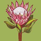 King Protea Colour IV by h-creative