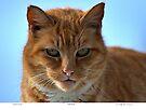 Coppertop Cat Portrait by Chriss Pagani