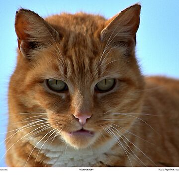 Coppertop Cat Portrait by Pagani