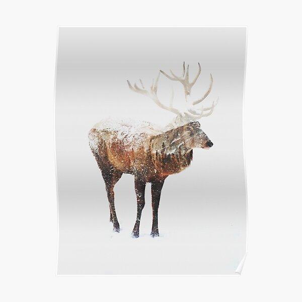 Arctic Deer  Poster