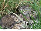 Mother & Kittens by Chriss Pagani