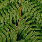 Close to a Fern by SincerelyEffy
