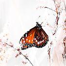 Monarch by Arjuna Ravikumar