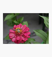 Hummingbird hawk moth Photographic Print