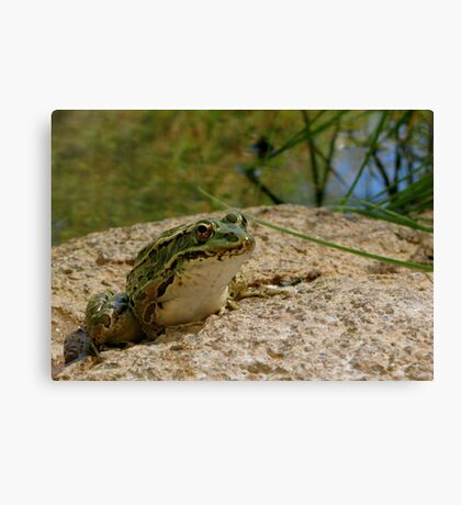 Chiricahua Leopard Frog Canvas Print