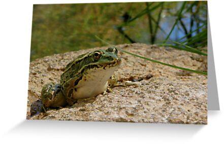 Chiricahua Leopard Frog by Kimberly Chadwick
