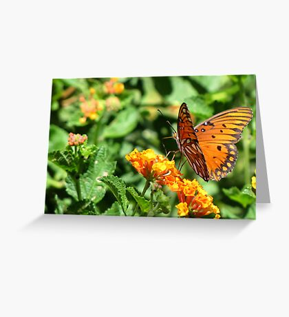 Butterfly ~ Gulf Fritillary Greeting Card