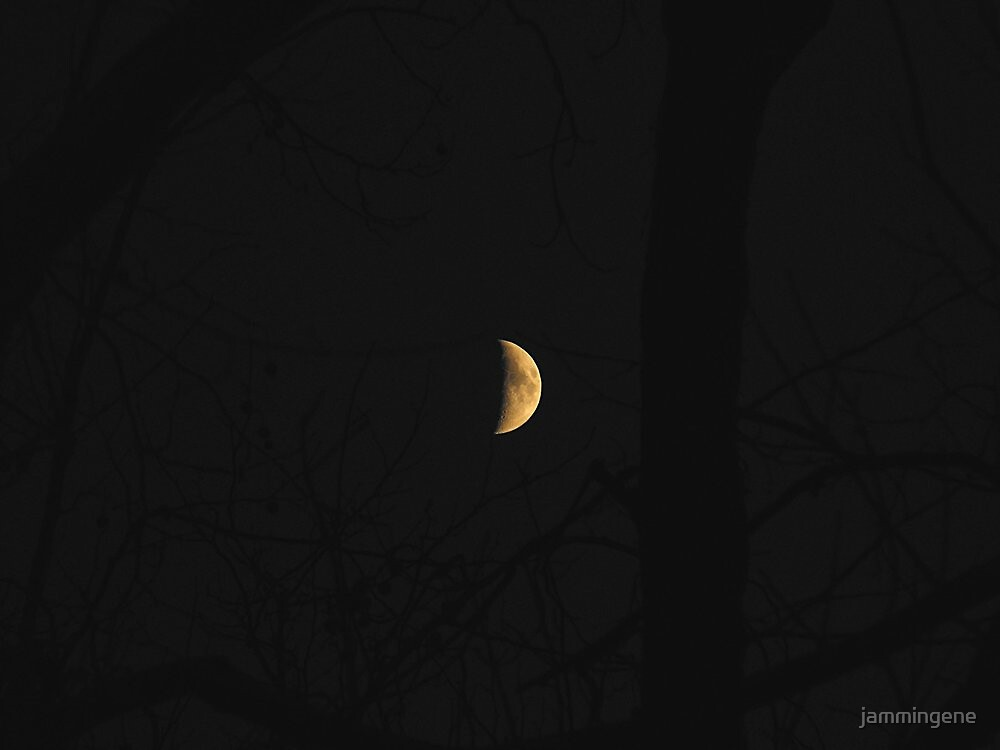 Moon over the woods (view larger) by jammingene
