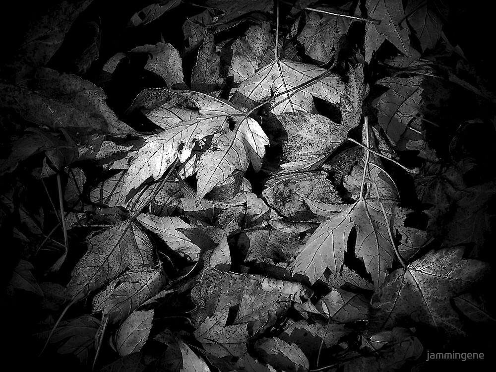 Leaves in black and white by jammingene