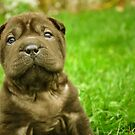 Baby Wrinkles by Teresa Young