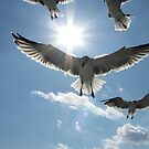 Seagulls of the Gulf by DottieDees