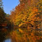 Mohican Autumn by Teresa Young