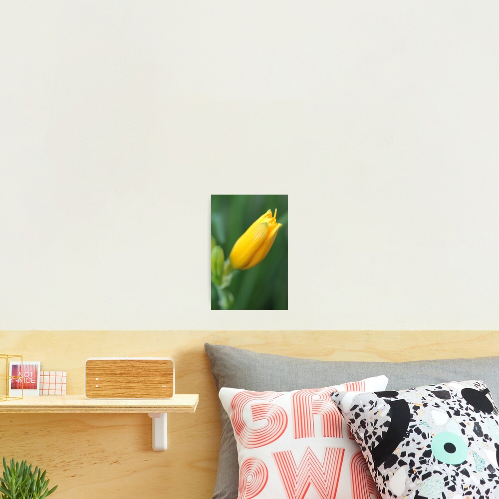 Yellow Lily Bloom Photographic Print