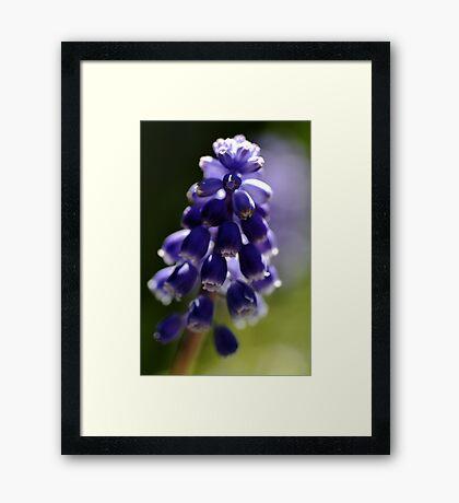 Light of blue Framed Print