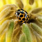 Call Me Mellow Yellow by Lance Leopold