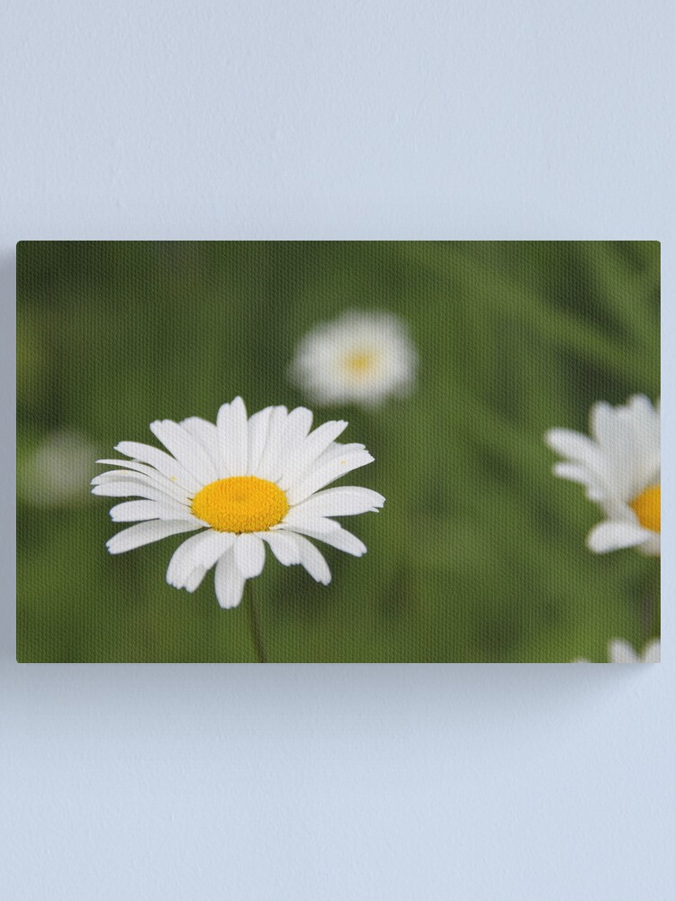 Alternate view of Daisies Canvas Print