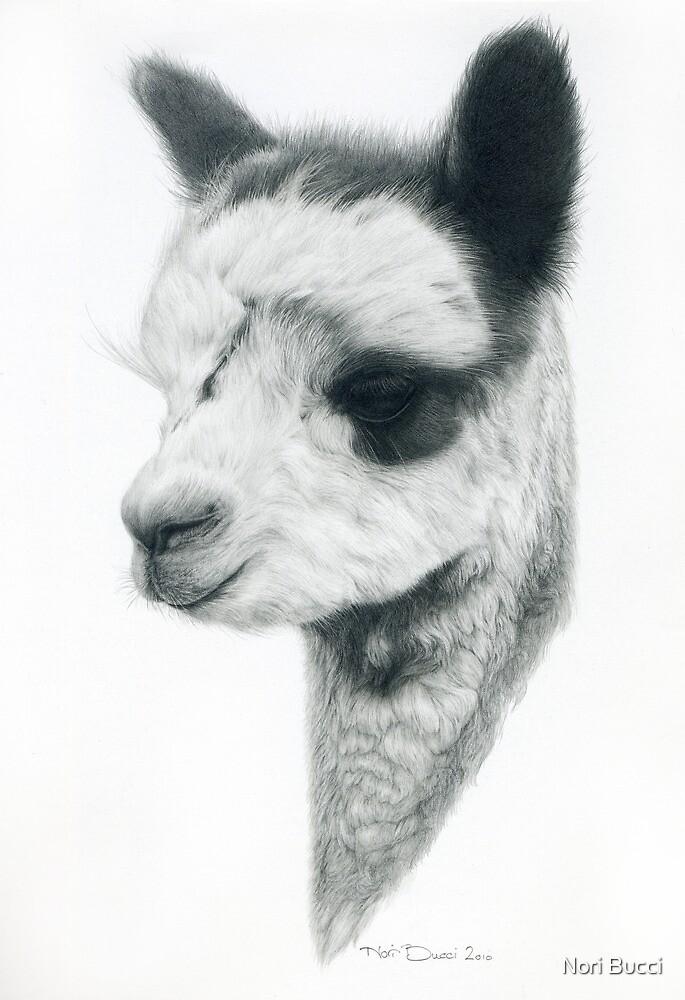 Little Alpaca by Nori Bucci