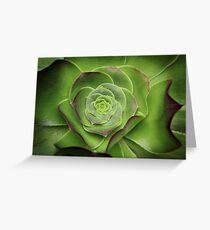 Green Aeonium Greeting Card