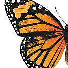 Monarch Butterfly   Left Wing   Vintage Butterflies   Butterfly Wings   Diptych    by EclecticAtHeART