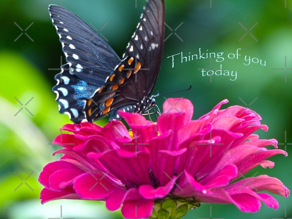 Thinking of you Today Card by FrankieCat