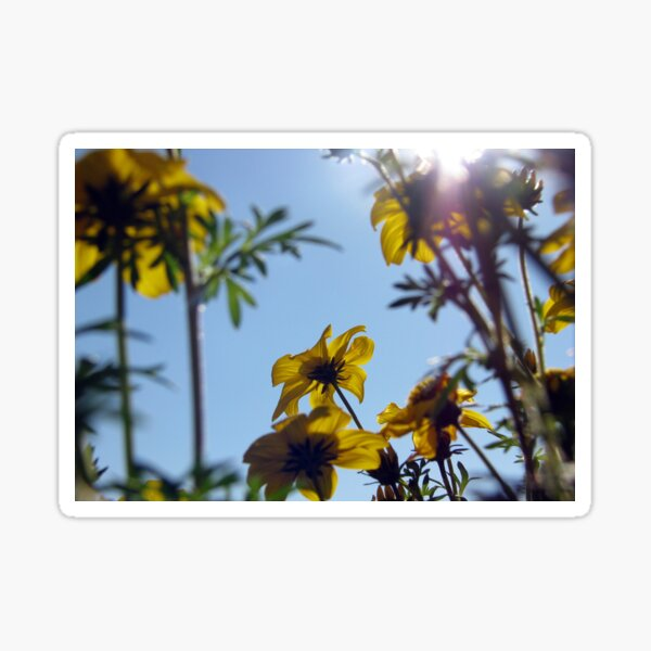Summer Sky Flowers 7 Sticker