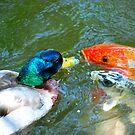 The Koi Fish Kisser  by laruecherie