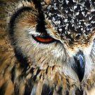 Owl Feathers by John Dalkin