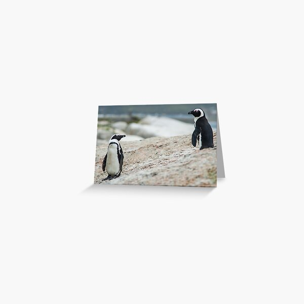 Penguins of Simons Town (4) Greeting Card