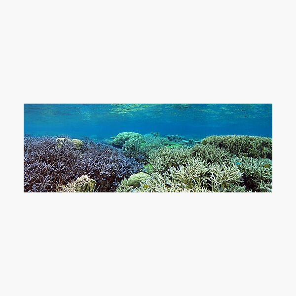 Heart of the Coral Triangle Photographic Print