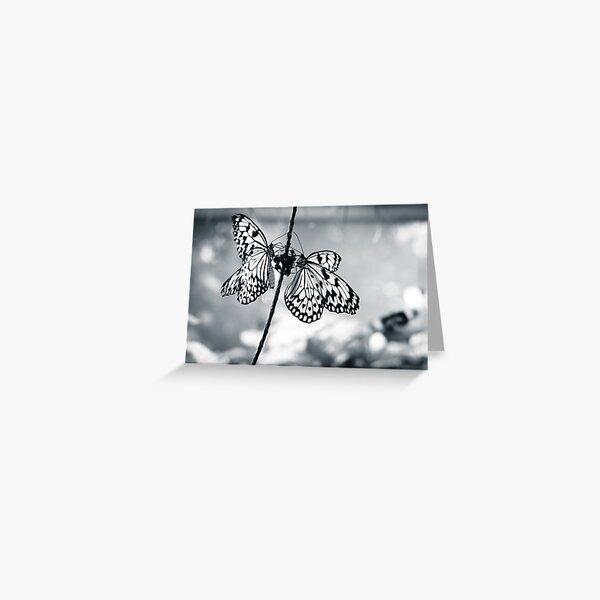 Black & White Butterflies Greeting Card