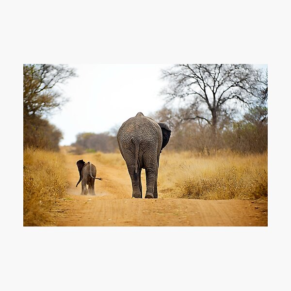 African Elephant (Loxodonta africana) mother and baby Photographic Print