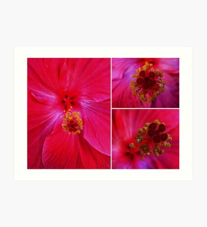 Red Hibiscus Collage Art Print