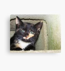 Hide n Seek  Canvas Print