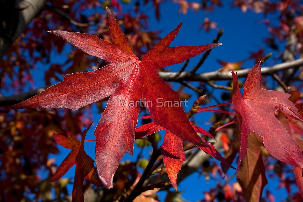 Autumn Blast by Martin Smart