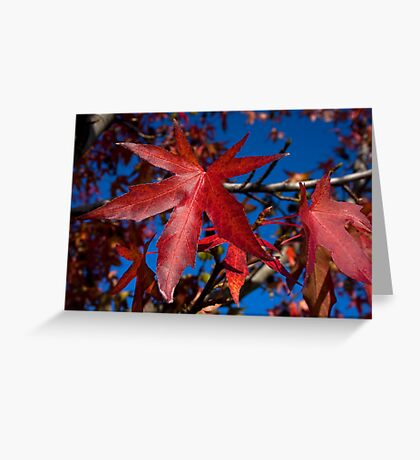 Autumn Blast Greeting Card