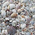 Shells!Shells!Shells! by Rosie Brown