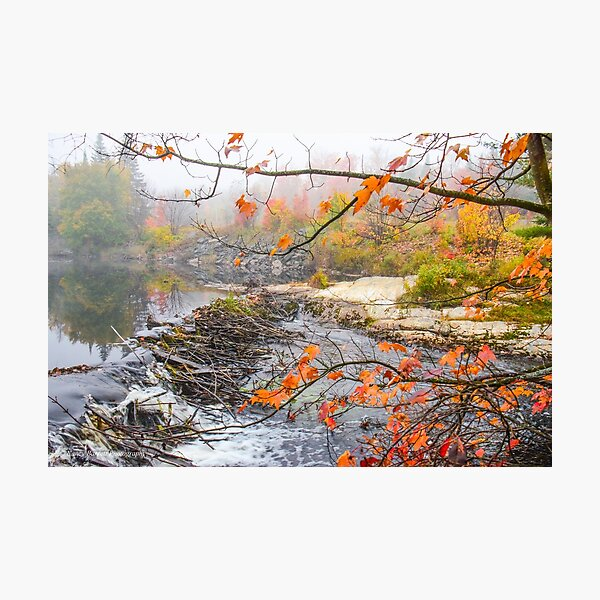 Misty Morning, Algonquin Park  Photographic Print