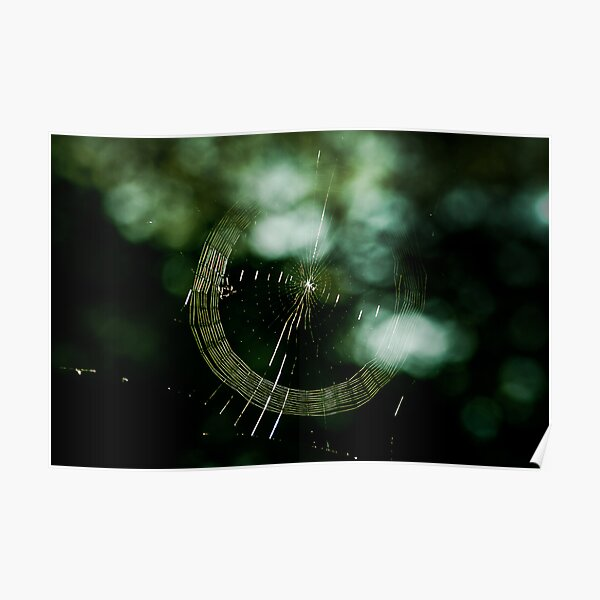 Web Spinning Poster