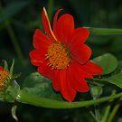 Orange! by flyprincess