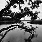 Tree on the River by Teresa Young
