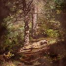 The Wooded Walkway by vigor