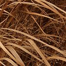 December's Grasses by Lyle Hatch