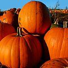 Pumpkin Harvest  by Tori Snow
