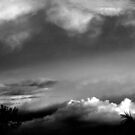 skytrees by sunranger