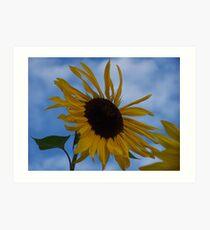 Sunflower (original) Art Print