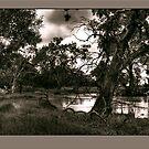 Flooding at Rupanyup 2010 by Jennifer Craker