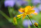 A delicate touch of Orange by William Martin