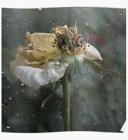 Rust 'n Roses ~ No 16 Poster