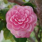 Camellia in Pink by Gregory John O'Flaherty