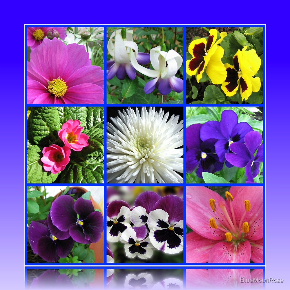 Colours of Summer Floral Collage von BlueMoonRose